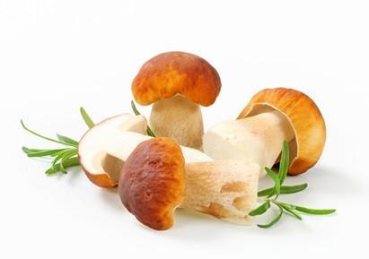 winter wellness mushrooms image