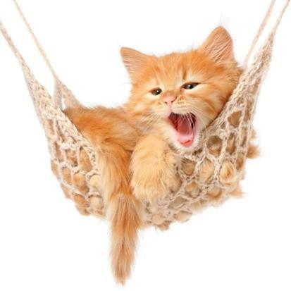home detox kitten relaxing in a hammock image
