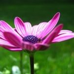 what is ayurveda flower image