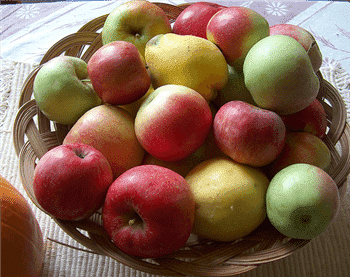 fat metabolism basket of apples image