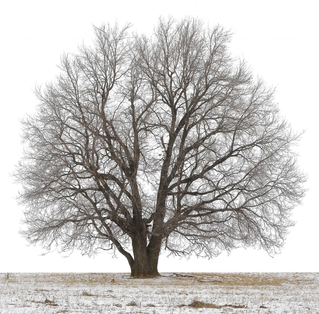 children's health tree in winter image