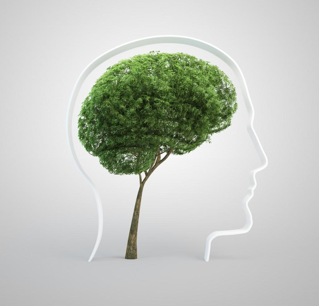 brain size tree in human heads silhouette image