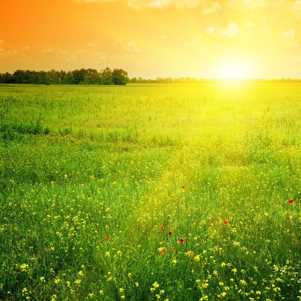 sun field vitamin d