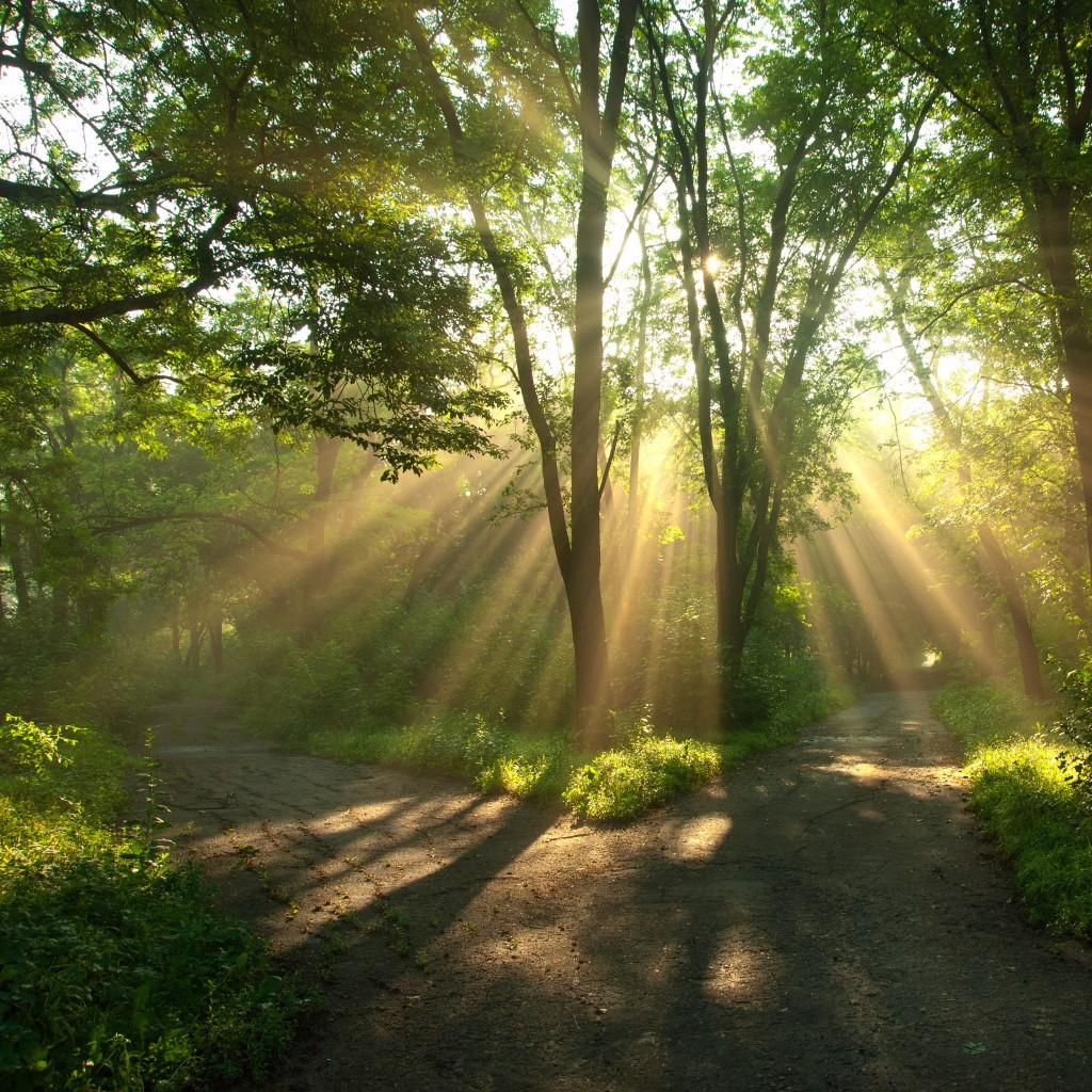 kitchari benefits inner calm sun shining through trees image