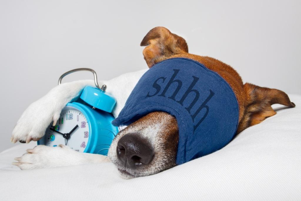 Dog sleeping on left side cradling alarm clock