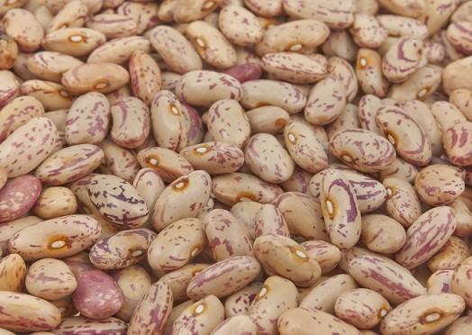 borlotto beans image