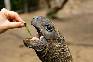 lifespa image, hand feeding turtle