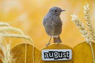 lifespa image, bird sitting on fence with august sign