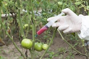 lifespa image, gmos tomato injection