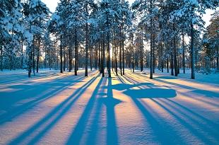 lifespa image, vitamin d winter forest long shadows