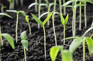 lifespa image, spring, sprouts, soil