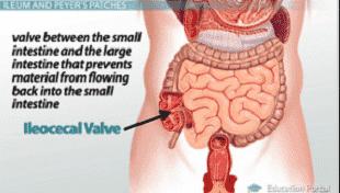 diagram from study.com