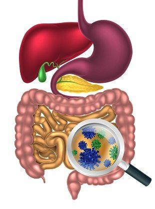 lifespa image, sibo, gut bacteria graphic of digestive system