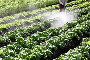 lifespa image, pesticides, farmer spraying pesticides on crops