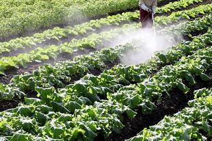 lifespa image, pesticides, farmer spraying pesticides on crops