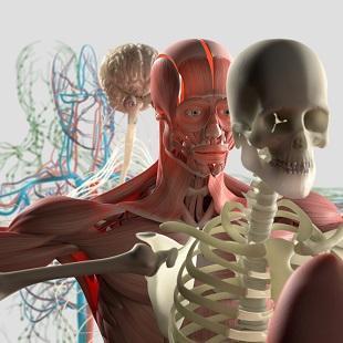 lifespa image, emergence, human body, anatomy exploded illustration