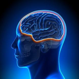 lifespa image, blood brain barrier, graphic, blue background
