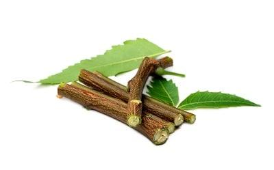 lifespa-image-neem-twigs