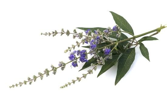 Chaste Tree Berry (Vitex) for PMS: The Female Hormonal Harmonizer