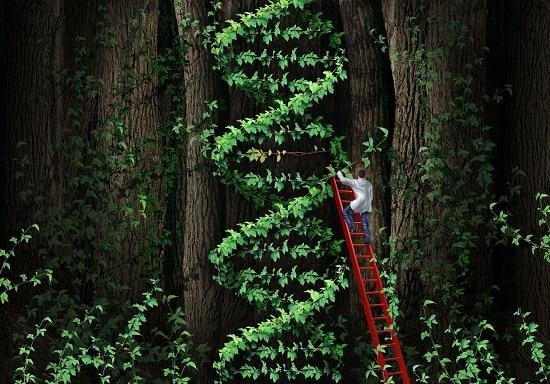 lifespa-image-dna-telomeres-gene-therapy-tree-ladder-man, cellular aging