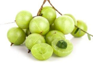 lifespa-image-amalaki-berries-gooseberry-close-up-white-background