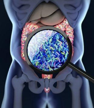 lifespa-image-gut-microbiome-x-ray-magnified-microbes-graphic-krimi