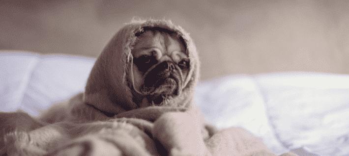 sleepy dog daylight savings time