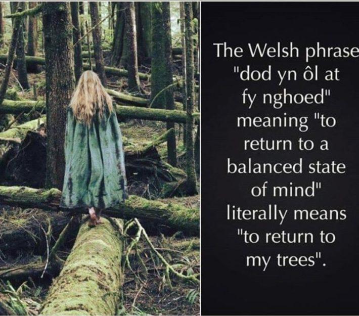 tree wisdom state of mind