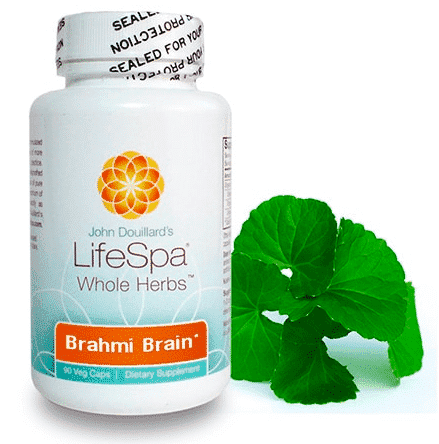 brahmi brain