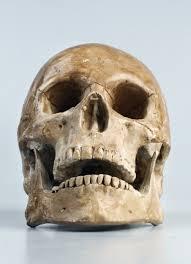 ancient skull teeth