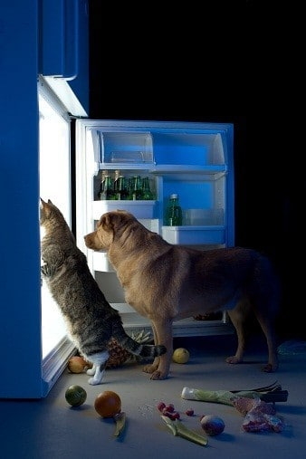 protein deficiency cat and dog looking in refrigerator cravings image