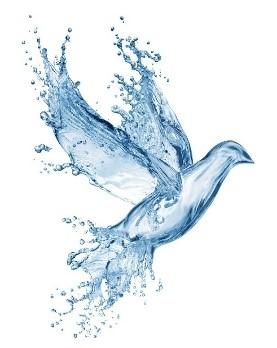 ayurvedic body type dove made of water image