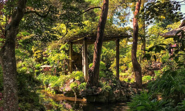 Forest garden with pond